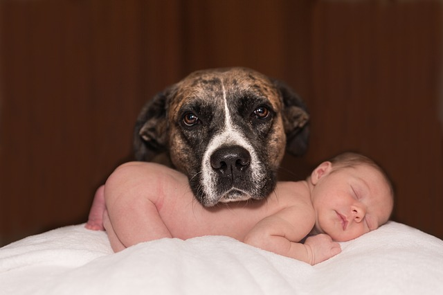 Introducing Your Baby to Your Dog