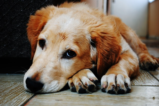 Trim Your Dog's Nails